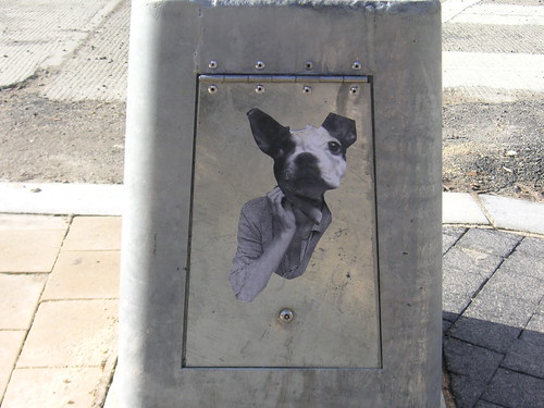 Boston Terrier @ Columbia Heights