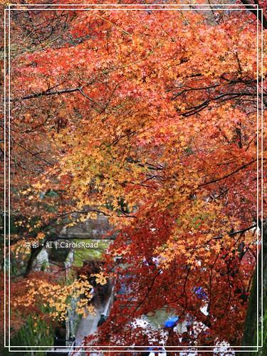 2009-12-11 京都 026 R