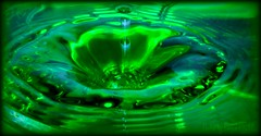 2009 Challenge, Day 351: RIPPLE, Its a flower (Photos by Keven) Tags: flower green water nikon waterdrop ripple splash nikkor 92308 applevalleyca 92307 2009challenge nikond5000 keventhompson photosbykeven 2009challenge351