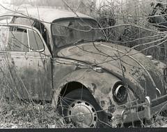 (emilyreg) Tags: bw film rust beatle