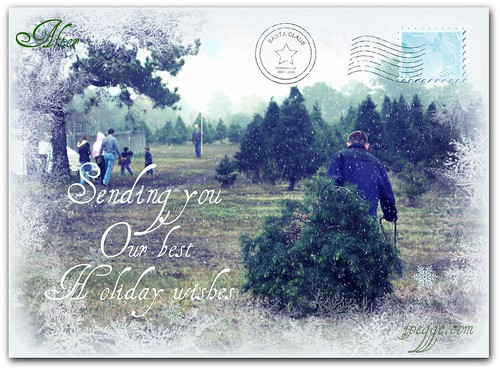 Christmas Tree Cutting After