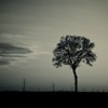 9778 (yoyostile) Tags: blackandwhite tree landscape landschaft baum schwarz wetter weis thesecretlifeoftrees