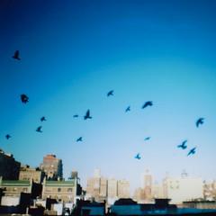 city birds (scott w. h. young) Tags: nyc newyorkcity blue sky white 120 film rooftop birds skyline buildings mediumformat fly view kodak manhattan away diana upperwestside soar 400nc