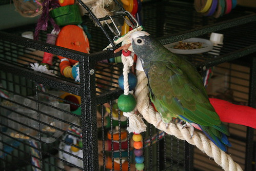 Pionus Play Top Cage
