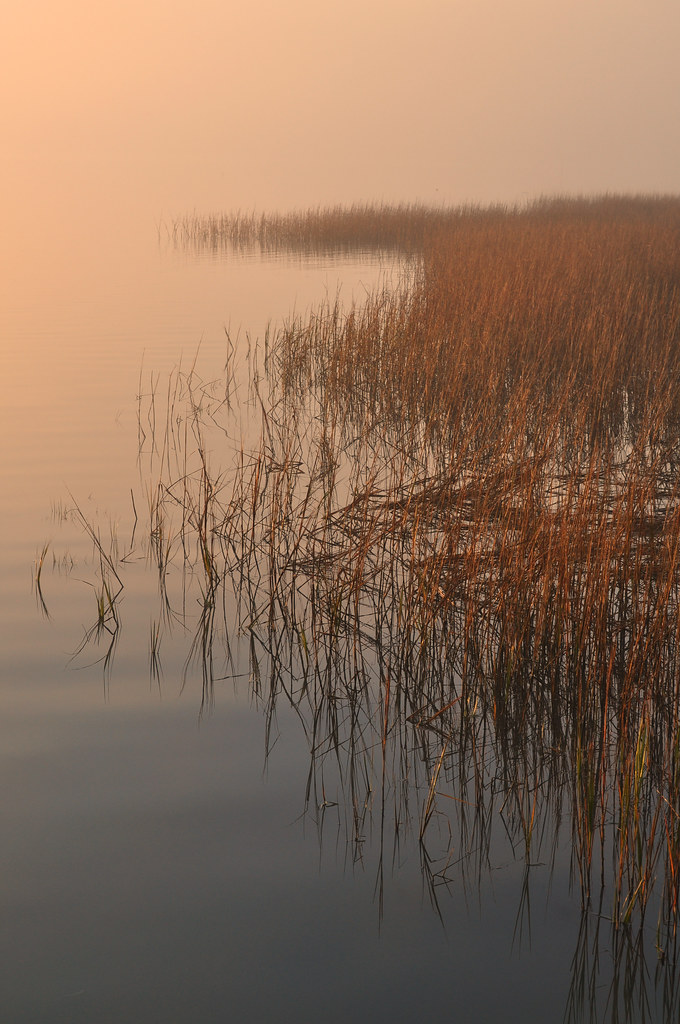Spartina Sunrise 1