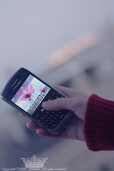 "Blackberry  (Queen333"" ) Tags: winter canon evening blackberry bokeh d l stc bb 450 f4    24105"