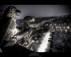 Notre Dame de Paris Gargouille (Feo David) Tags: paris france notre dame gargouille alemdagqualityonlyclub