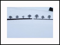 Seven Winter Trees Lining a Snow Covered Dyke (Magdalen Green Photography) Tags: trees winter nature scotland cool scottish simplicity dyke wintertrees lining snowcovered scottishwinter dsc5761 iaingordon sevenwintertrees snowcovereddyke