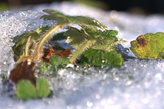 Iced - Explored Jan 05, 2010 (Dublin Rose) Tags: ice avondale wicklow avondalepark kartpostal
