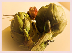 At least you'll never be a vegetable , even artichokes have heart ~  Amlie Poulain (Maricruz Suarez - Photography ) Tags: film vegetables rose bokeh creative inspired cinematic artichokes lightroom suarez maricruz poulain amliepoulain presets atributeto mariacruz maricruzsurez