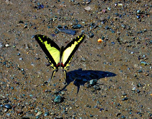 Costa Rica_butterfly