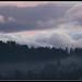 Nature : bird, sky, cloud, tree..