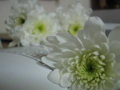 flowers (VIP Bedoor) Tags: wooow