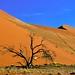 Dunes, Dead Tree