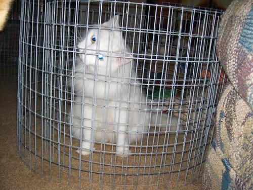 Kitt in prison