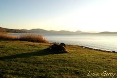 La luce del tramonto (lisaguty ) Tags: panorama montagne lago italia tramonto ombre sole tronco riflessi perugia luce paesaggio umbria colline trasimeno canne sonyalpha230 lisaguty