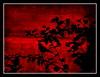 تو پرنده ای و من ، درخت (yalldda) Tags: tree bird iran ایران درخت مرگ پرنده قرمز غم وحشت خون یلدا انتظار گنجشک رویا سیاه سرخ خواب دلتنگی عزا مشکی ماتم دلهره کافهنادری yalldda وقتیهیچخبریازایوبنیست