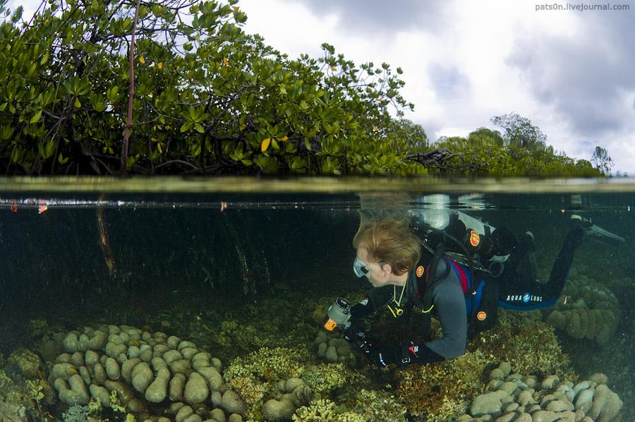 Чарующий  архипелаг Раджа Ампат в Западном Папуа