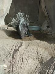 Zoo of Denver  DSCN0033