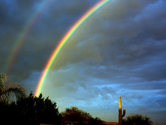 Double Double (oybay©) Tags: shadow arizona cactus sky sun color reflection nature colors rainbow natural stormy