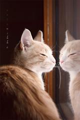 Watching or judging neighbours? (Untuvikko) Tags: cat kitten peterpan