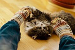 socke / battle cat (staflo) Tags: socks cat 50mm fight minolta f14 sony af alpha 700 a700 minoltaaf50mmf14 minoltaaflens50mmf14