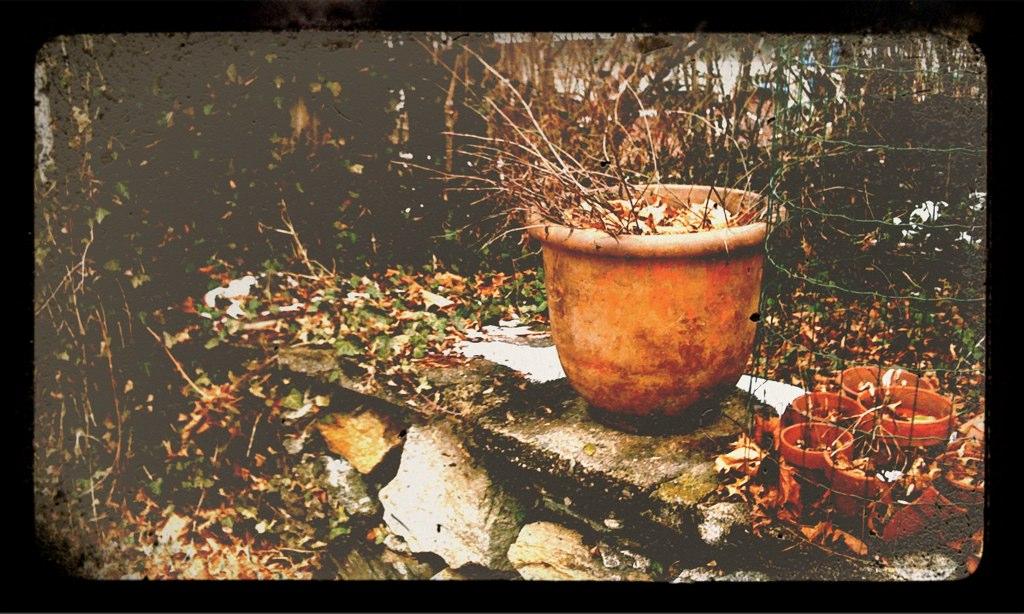 My grandmother's garden in winter