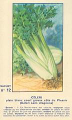 legume12 celeri