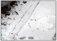 Nike Apple iPod dongle escaped (swanksalot) Tags: snow chicago apple alley ipod footprints nike westloop iphone swanksalot sethanderson