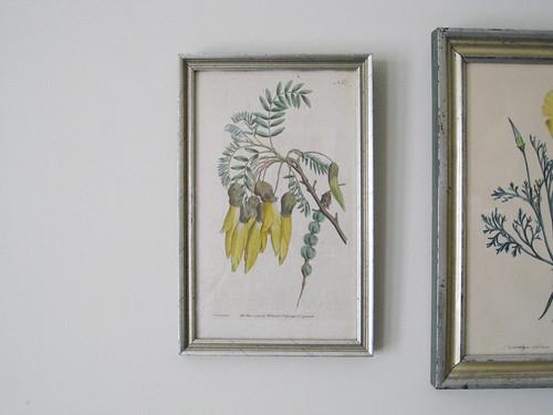 Botanical Print(s)