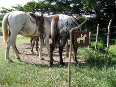 horseback riding, Rancho Alcala (K. Hauser) Tags: cuba horsebackriding guardalavaca holgun reitausflug
