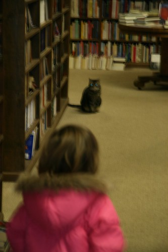Dusty Bookshelf Cat