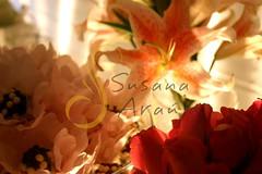 Graziela_Giovani_54 (Susana Araujo Eventos) Tags: flores floral riodejaneiro rj flor rosa casamento festa decorao lilas lils cerimonial cerimonialista susanaaraujo susanaarajoeventos