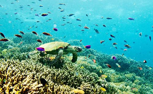 Flores Underwater 16