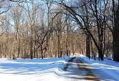 alone on a road in the winter woods (christiaan_25) Tags: road blue trees winter light white cold sunshine forest landscape woods alone quiet afternoon shadows peaceful edge february