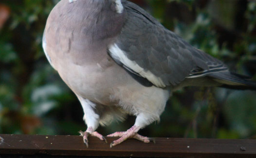 pigeon toed 18