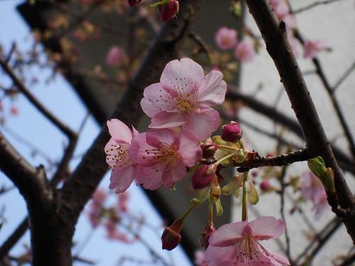 2010-02-19 東京之旅第五天 043