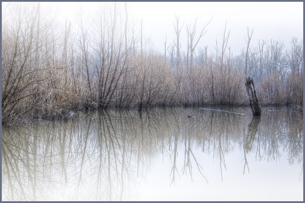 53/365: Swamp Thing