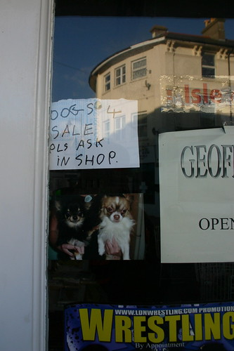Dogs for Sale, Isle of Wight