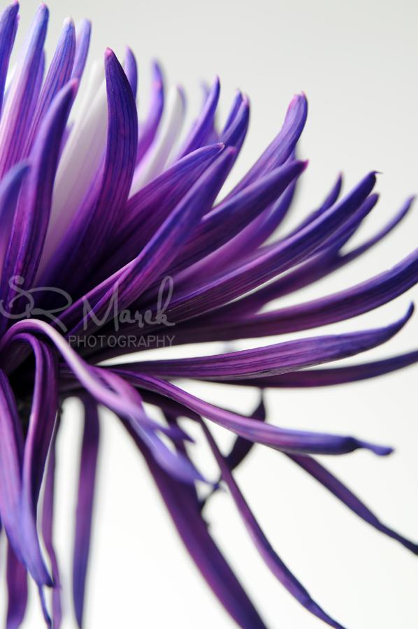 flower1rs