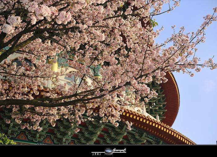 Sakura sunny 28