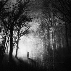 The Unknown (Midnight - digital) Tags: light mystery forest dark square woods loneliness sinister dream atmosphere eerie haunted spooky unknown nightmare cinematic