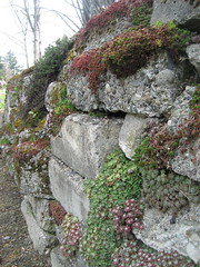 Rubble Wall (AGA~mum) Tags: conservatory volunteerpark succulents sedums verticalgardening seattleparks concreterubblewall