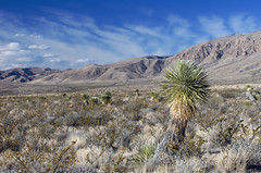 IMGPD06924 - Lincoln National Forest - Guadalupe Mtns