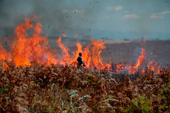 Controlled Burning, Nyika National Park