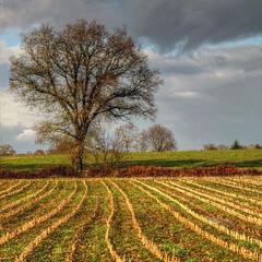 paysage campagnard (rogermarcel) Tags: france nature landscape paysage hdr 1001nightsmagiccity