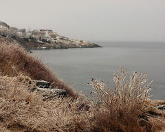 Ice Coated (Clyde Barrett (0ffline)) Tags: mist ice fog glitter newfoundland nl nfld freezingrain sleet bishopscove clydebarrett