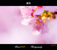 (Shyness) (nans0410) Tags: pink light macro bokeh bloom sakura           tamran90mm