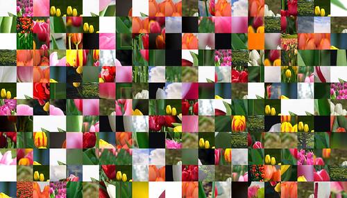 Tulip Montage