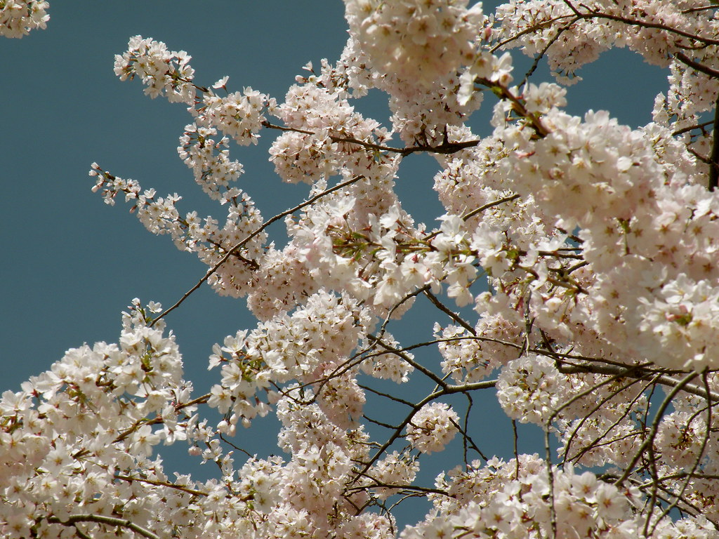 25 Springtime Activities blog image 1